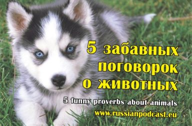 5 funny Russian proverbs about animals